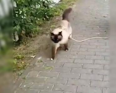 kitty leash