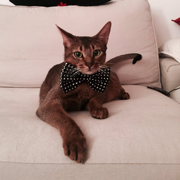 polka-dot-bow-tie
