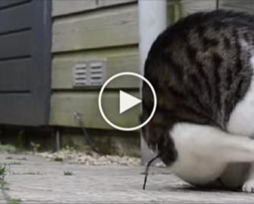 somersaulting cat