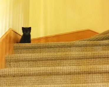 black kitty stairs