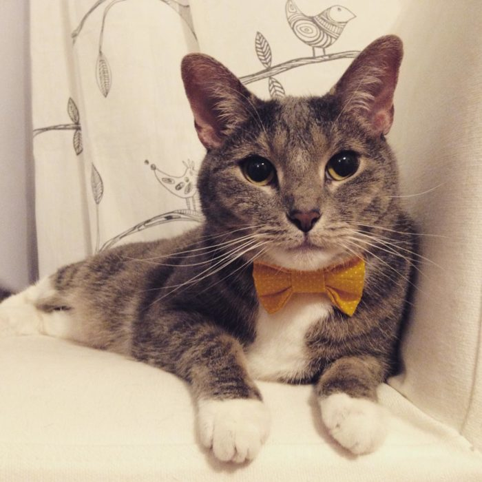 handsome silver meow