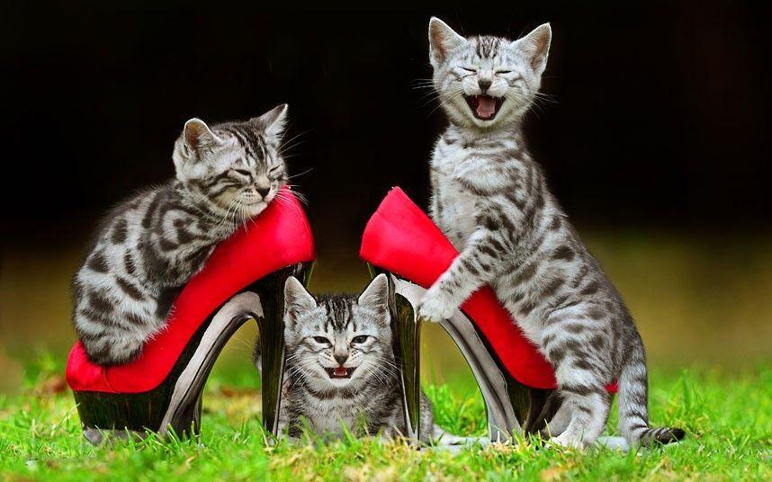 alol-we-stole-your-heels