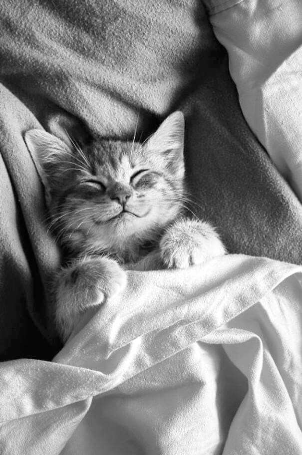 smiling-cat-12
