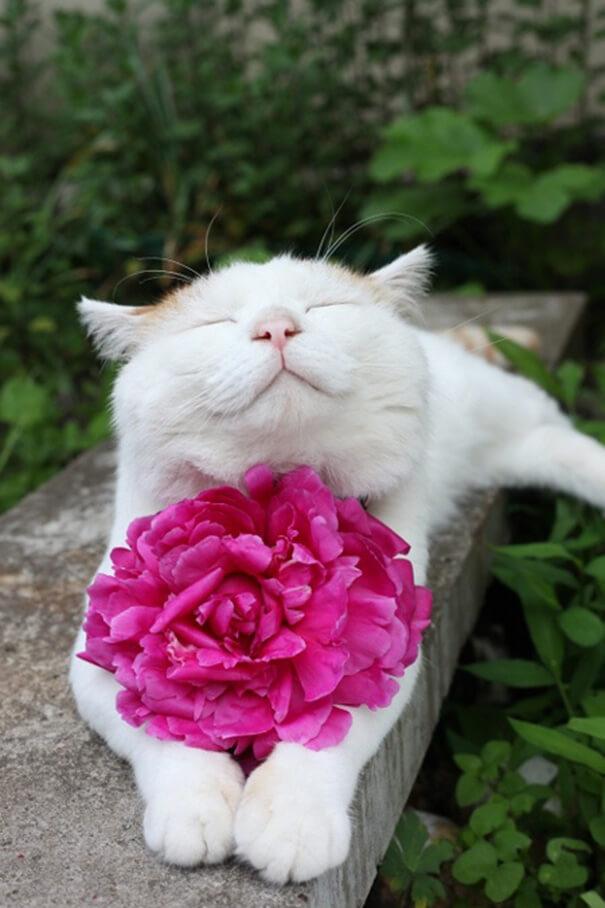 smiling-cat-6