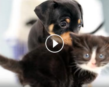 kittens meet