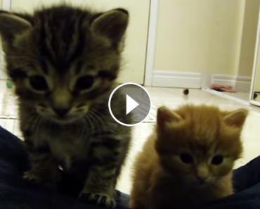 kitten parade