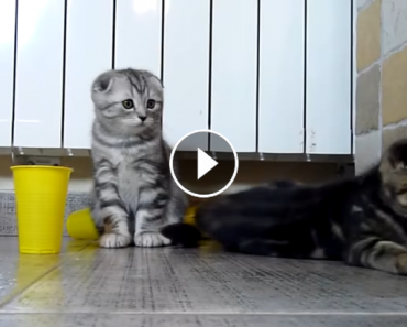 alley kittens