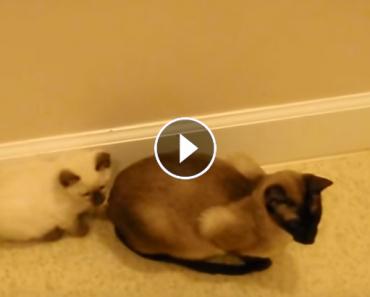sneakiest kitten