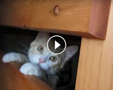 crazy kitten fun