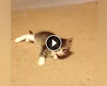 Kitten Spots