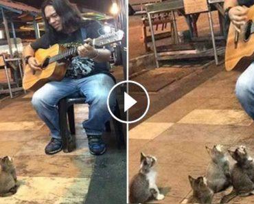 kittens showed