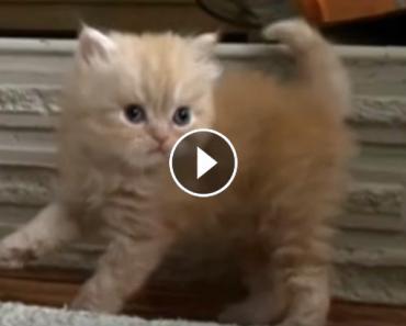 fluffiest video