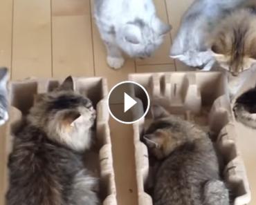 summon your kitties