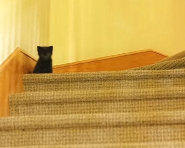black kitty stairs