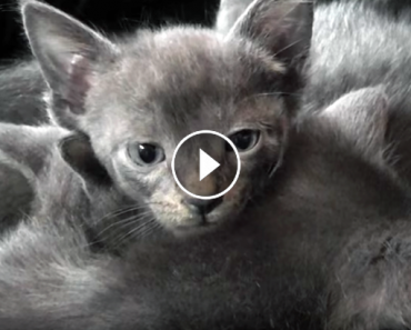purring kittens