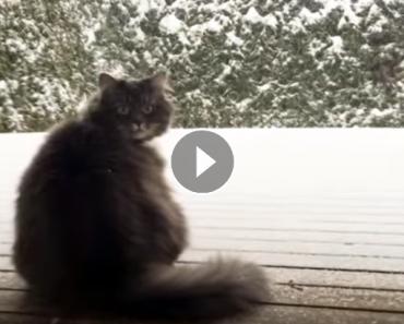 cat discovers snowballs