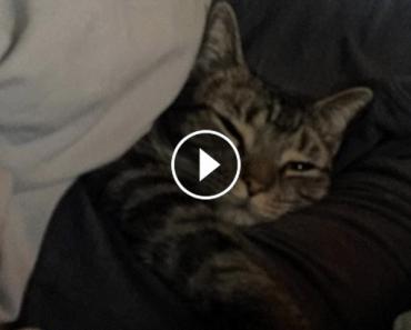 kitty loves