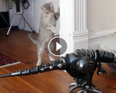Curious Kitty Meets Robot Dinosaur