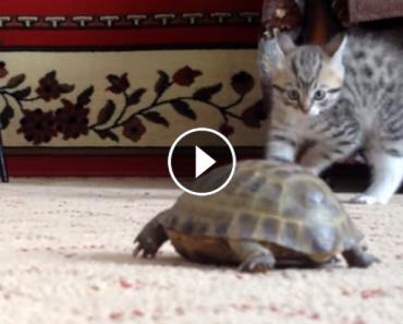 Kitten Throws Insane Ninja Moves