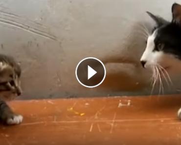 Mama Cat Calls