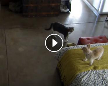 Cat Tells Dog