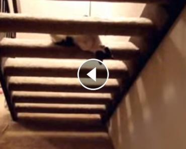 crazy kitten